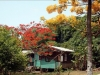 Grenada_Fritz 245