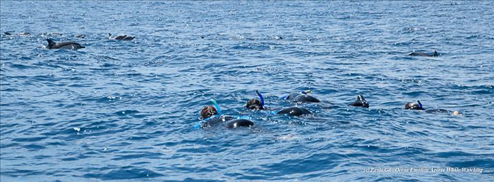 Swimming with Dolphins (1)