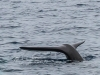 Sperm whale (3)